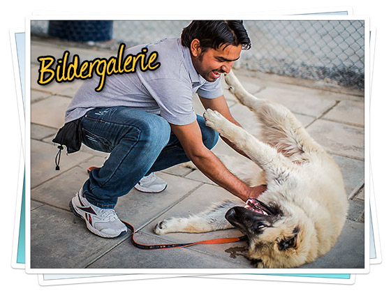 Bildergalerie: Das RAK Animal Welfare Centre