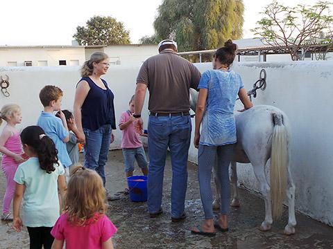 Pony-Wäsche
