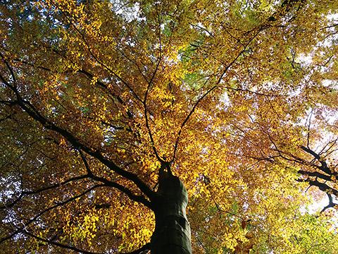 Sonnenschein im Herbst