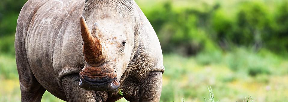 Humpy Grumpy und das Rhino