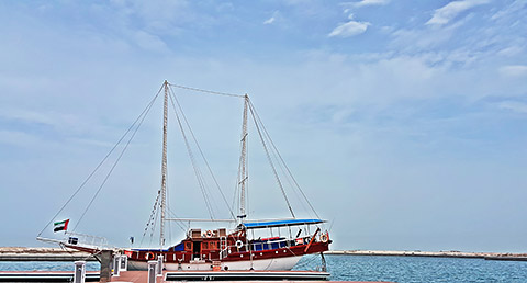 Sea Bird in Mina al Arab