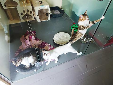 Katzenstation