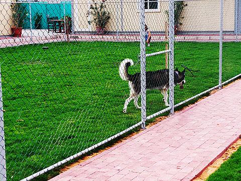 Dog Walk mit Gras