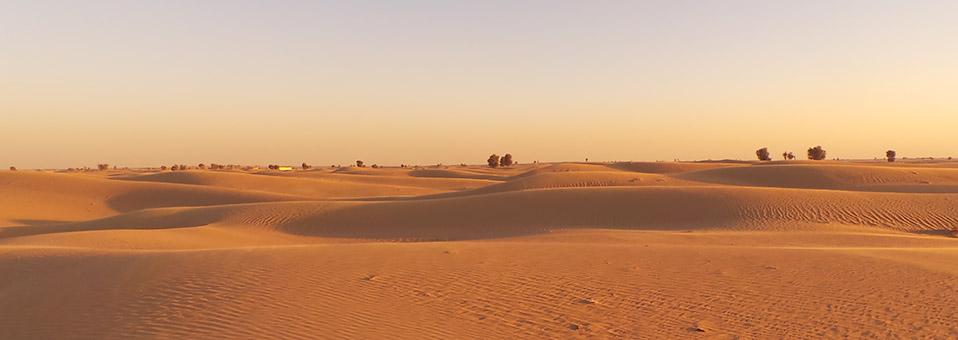 Ein Nachmittag bei der Kamel-Uschi