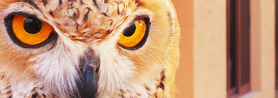 Natur und Tiere erleben in Al Wadi