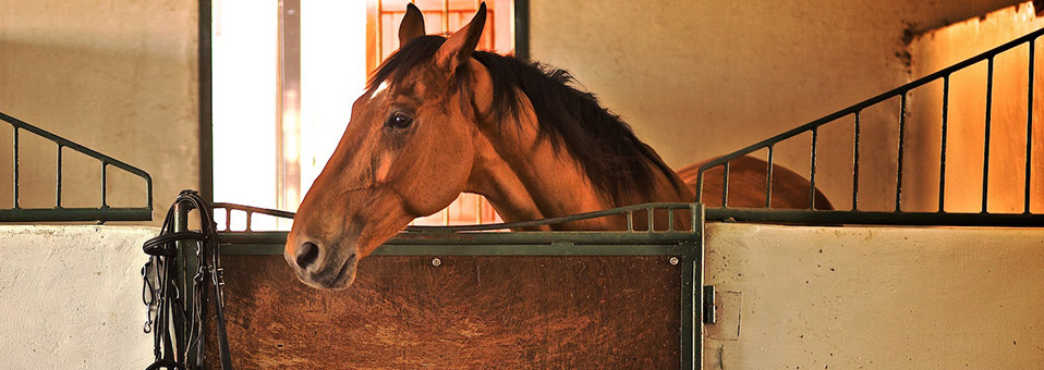 Al Wadi Equestrian Brunch