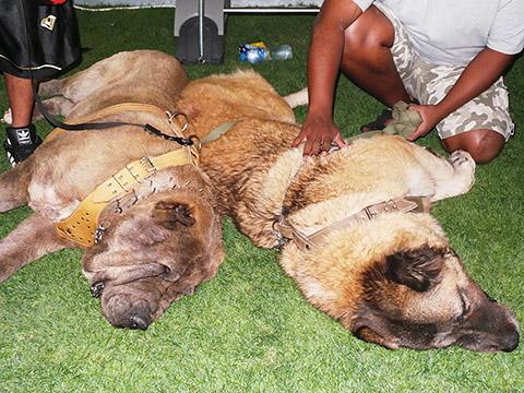 Riesenhunde