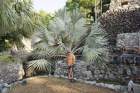 Pflanzen vor dem Wasserfall