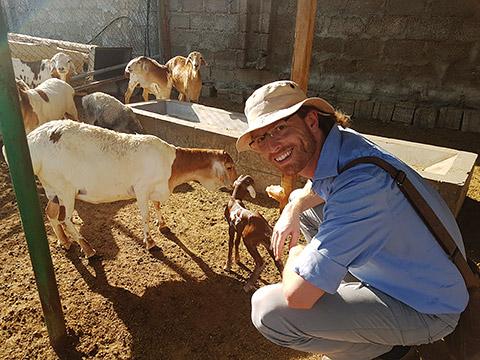 Schafe mit Besucher