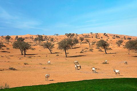 Natur in Al Wadi