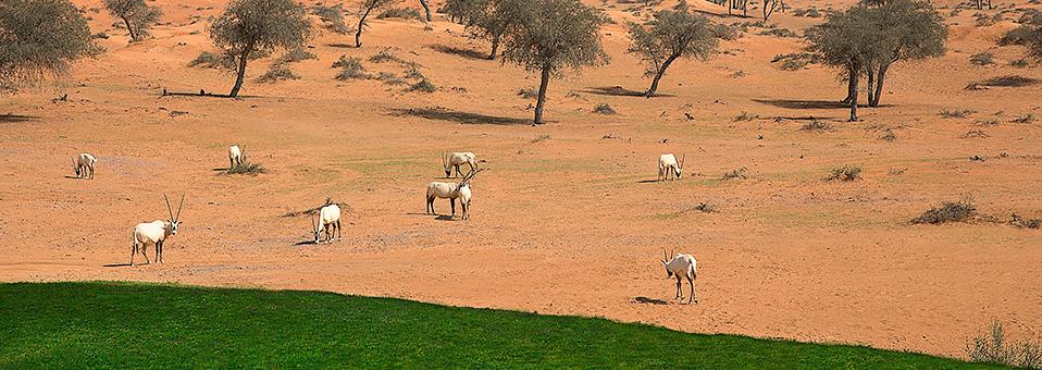 Eid Al Adha im Al Wadi Desert Resort