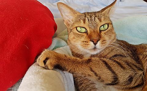 Sterilisierte Katze
