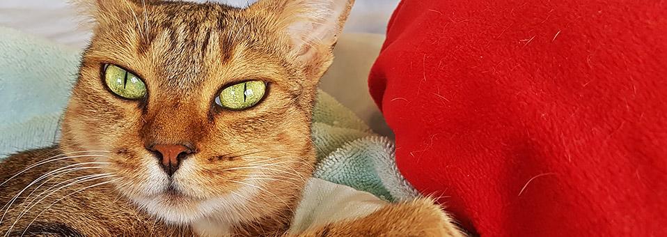 Sterilisation und Kastration beim Haustier
