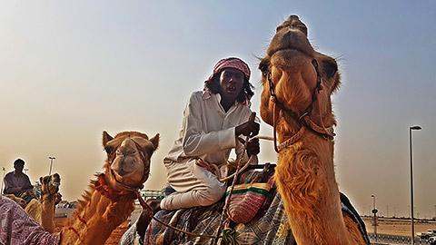 Beduine auf Kamel