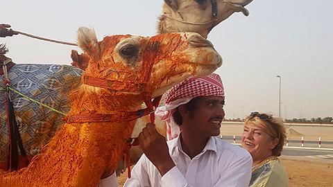 Kamel mit Safranöl