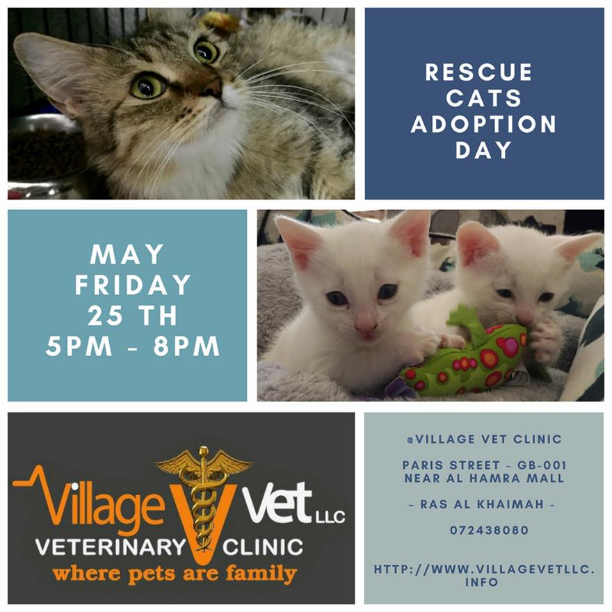 Adoption Day @ Village Vet