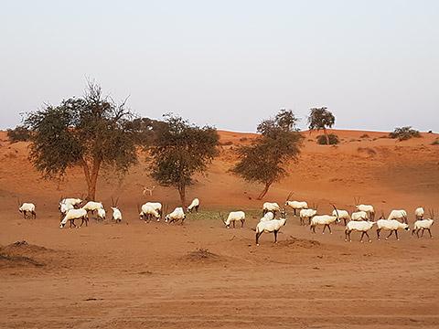 Tiere in der Wüste