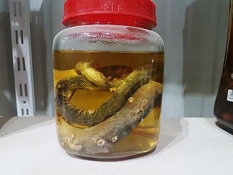 Konservierte Schlangen