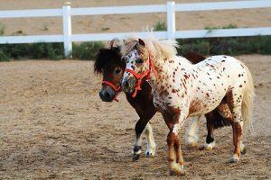 Ponys