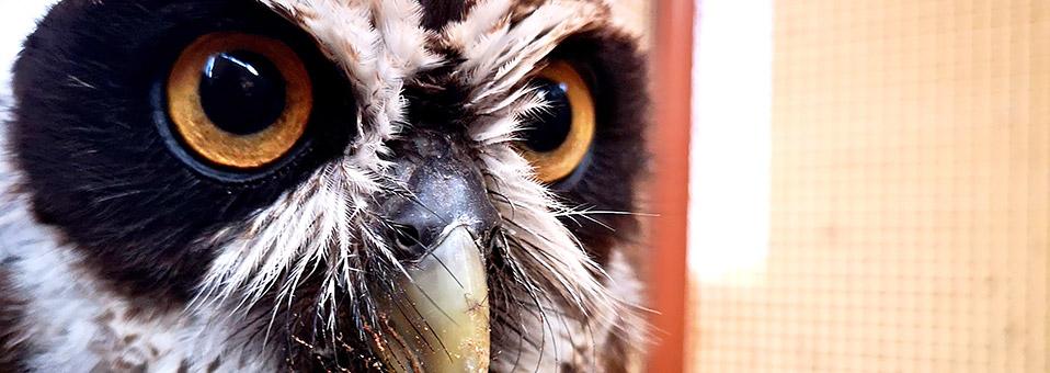 Falken und Eulen – hautnah zum Anfassen