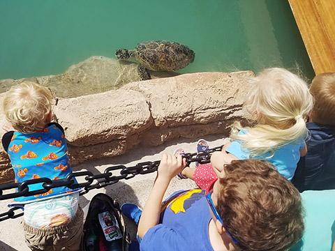Füttern von Schildkröten