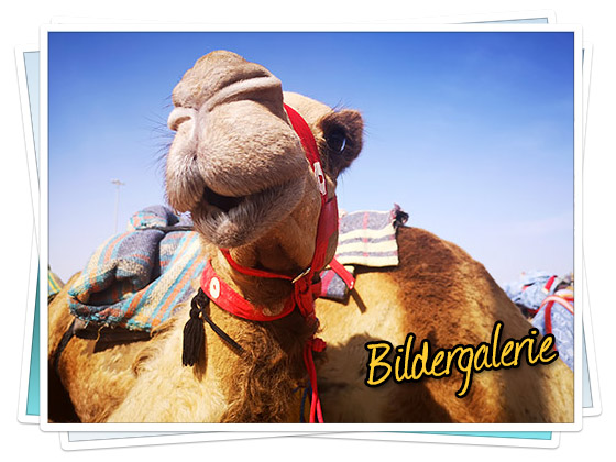 Bildergalerie - Heritage Festival und Kamelrennen in Marmoom 2019