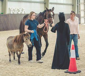 Führen von Pferden