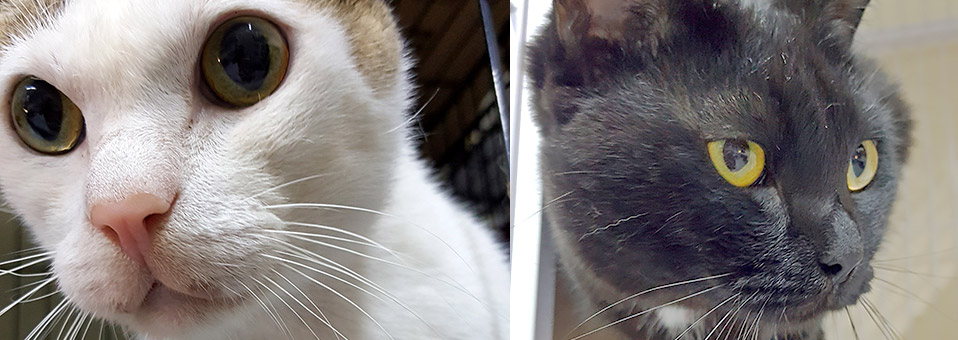 Hilfe für Straßenkatzen