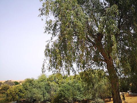 Baum mit Zweigen und Blättern