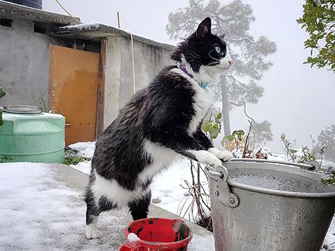 Mogli im Schnee