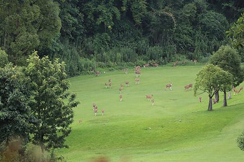 Tiere auf dem Golfplatz