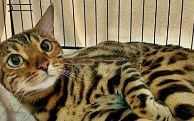 14. Internationale Katzenshow