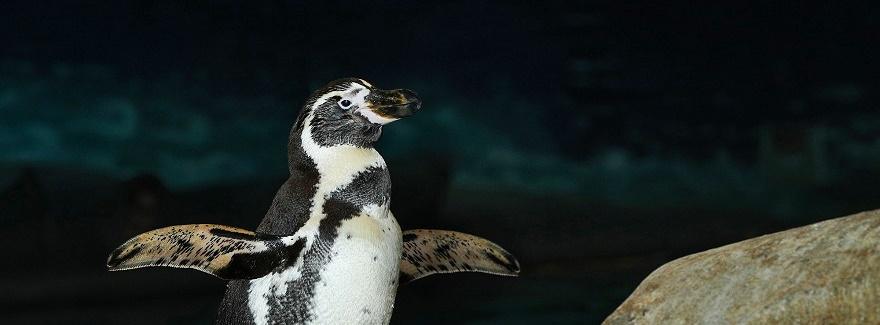 Glückliche Pinguine in Al Ain
