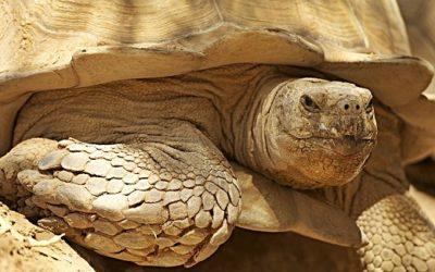 Der Tag der Schildkröte