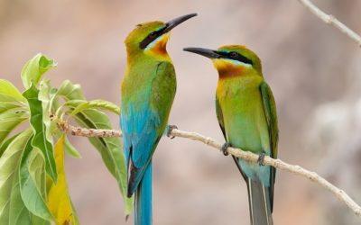 Der Tag der Zugvögel