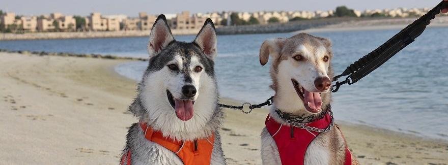 Urlaub mit Hund in Ras Al Khaimah