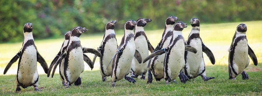 Den Pinguinen ganz nah