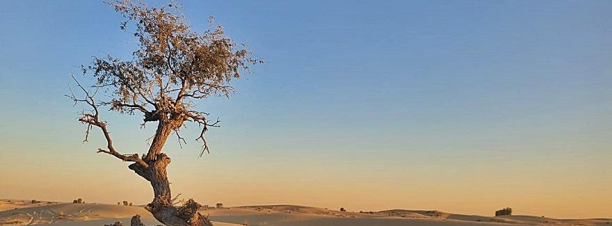 Die Stille der Wüste