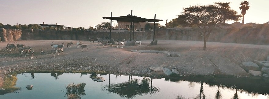 Ramadan-Zeiten im Al Ain Zoo